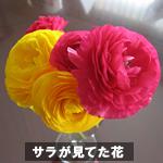 flower0410.jpg