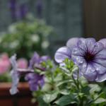gardening_050618.jpg
