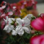 gardening_050618_2.jpg