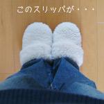 slipper_1.jpg