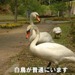sssm_08.jpg