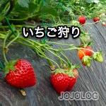 ichigogari2010_1.jpg
