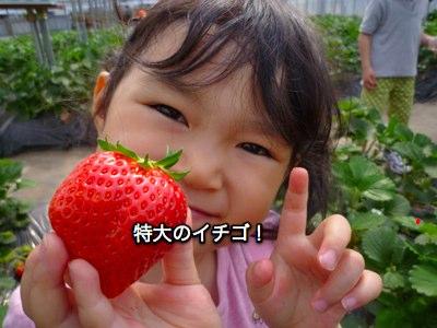 ichigogari2010_2.jpg