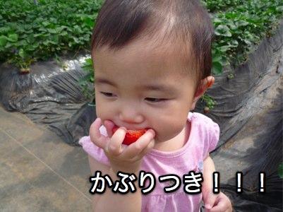 ichigogari2010_3.jpg