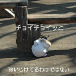 marathon2011_3.jpg